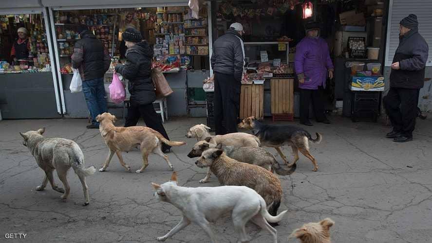 في سابقة فريدة من نوعها : جماعة المحمدية تبرم اتفاقية مع جمعية لتعقيم الكلاب الظالة