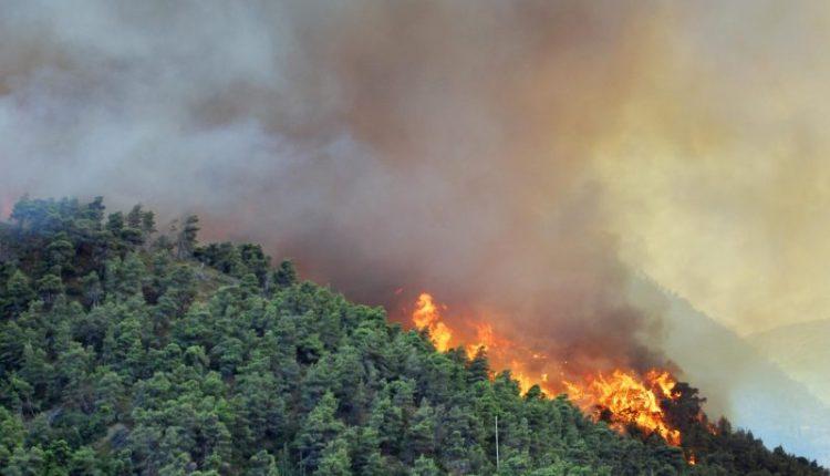 عاجل !! حالياحريق مهول بغابة واد المالح بنواحي المحمدية