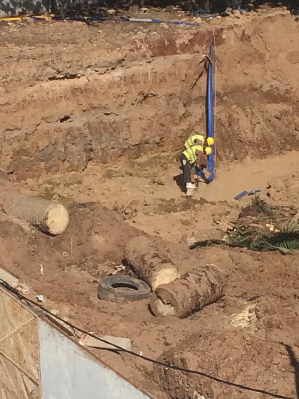 بالصور : مقاولة في البناء بالمحمدية تعدم شجرة النخيل بعد اقتلاعها .