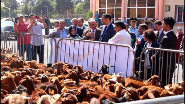 عامل عمالة المحمدية يشرف على عملية توزيع مجموعة من رؤوس الماعز نواحي المحمدية