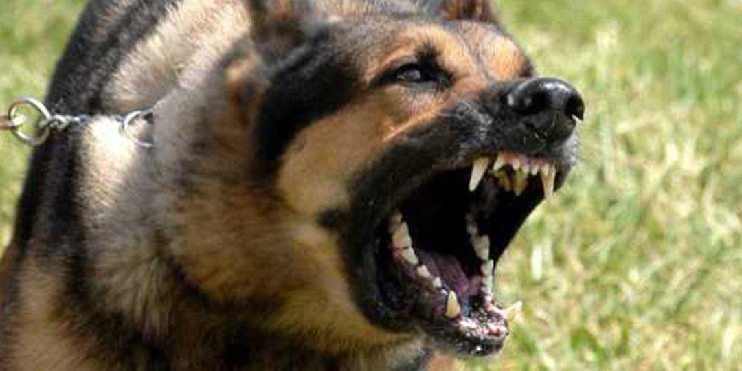 وجدة….الرصاص يلعلع لايقاف شخص هائج وكلب شرس