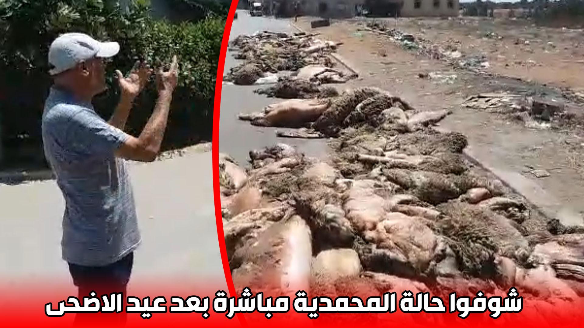 """شوفوا حالة المحمدية مباشرة بعد عيد الاضحى .. """"البطاين"""" بالشارع"""
