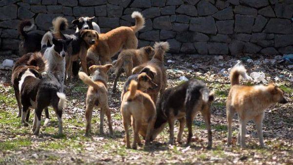 مأساة صادمة ..كلاب تنهش مولود داخل مستشفى