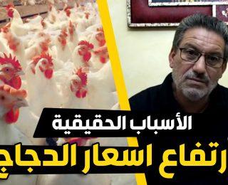 رئيس جمعية الدواجن .. يكشف الأسباب الحقيقية وراء ارتفاع ثمن الدجاج