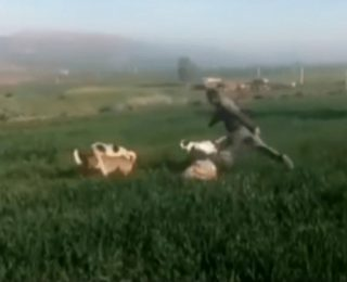 فيديو يهز المغاربة … رجل يعنف سيدة  وكلاب تعضها